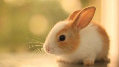 Photo of Tavşan isimleri