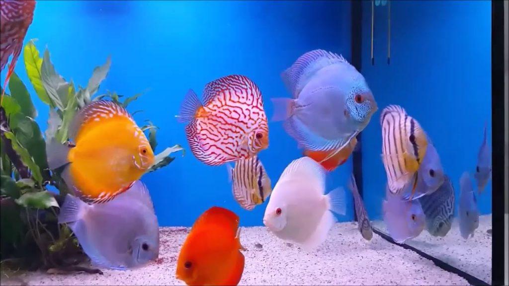 balık isimleri